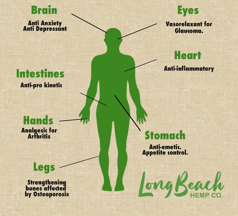 CBD Body Diagram